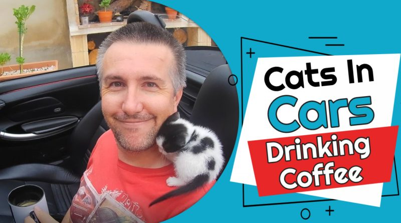 Cats In Cars Drinking Coffee